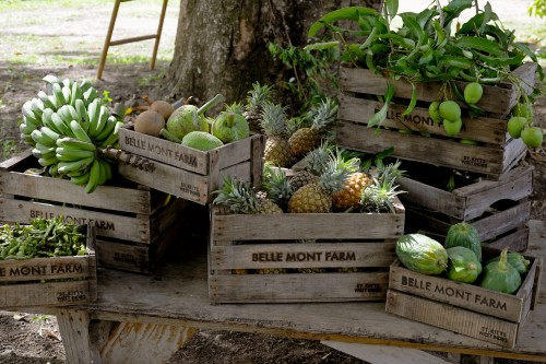 st kitts fruit in box